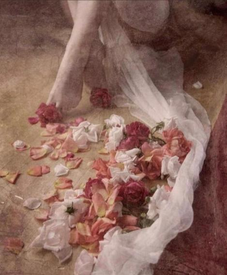 pink rose portrait